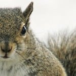 "Nightwatch director to produce a new horror film about 'Squirrels', ""cute little things, until they get hungry!"""