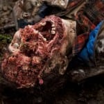 First images and poster for Grizzly Bear survival horror 'Endangered' prepare to hunt you down