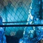 The beast unleashed in new stills from 'Harbinger Down'